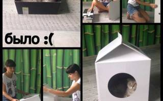 Домик для кошки MilkBox (Котофабрика): отзывы, фото, видео, сборка