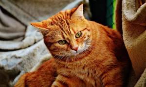 380 имен для рыжего кота или кошки (по полу, оригинально)