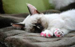 Антицарапки для кошек: плюсы и минусы накладок на когти