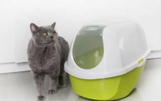 Туалет для кошек — закрытый лоток, или домик, особенности выбора и использования кошачьего туалета