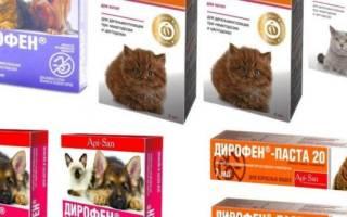Дирофен Плюс (суспензия, таблетки, паста): инструкция по применению для взрослых кошек и котят, отзывы