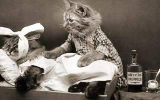 Капельница кошке в холку: как правильно провести процедуру и не навредить животному, используя катетер