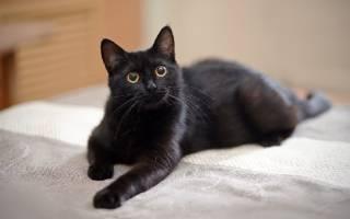 380 имен для черного кота или кошки (по полу, оригинально)