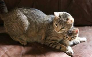 Как ухаживать за котёнком и взрослой кошкой в домашних условиях: правильная организация пространства, кормления, гигиены и ветпомощи кота