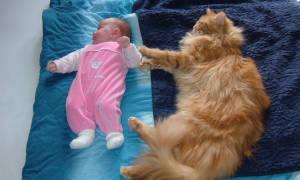 Сколько стоит Мейн Кун. Из чего складывается цена на кошек и котов Мейн Кун