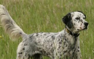 Клички охотничьих собак — как выбрать имя