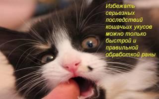 Что делать, если укусила или поцарапала кошка, в том числе, если опухла рука после укуса