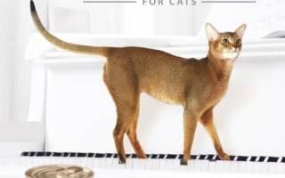 Сухой корм для кошек Mealfeel, отзывы о «Милфилд» ветеринаров и владельцев животных, его состав и виды, плюсы и минусы