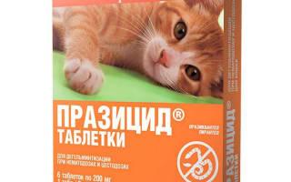 Празицид для кошек: отзывы, инструкция по применению, противопоказания