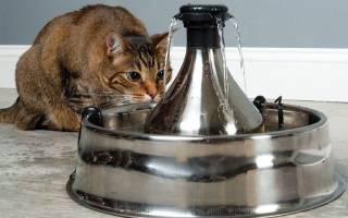 Автопоилки для кошек: ТОП 7 товаров [рейтинг, цены, отзывы]