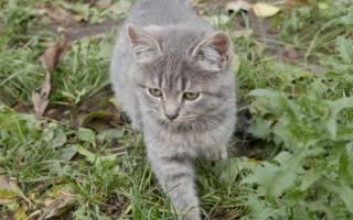 380 имен для серого кота или кошки (по полу, оригинально)