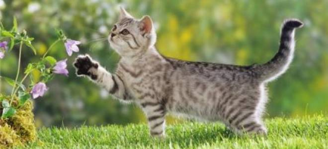 Шлейка для кошки: особенности выбора и использования поводка для кота, как сделать его своими руками