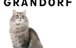 Корм для кошек Grandorf (Грандорф) — отзывы и советы ветеринаров