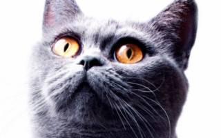 500+ Смешных и прикольных кличек для котов и кошек