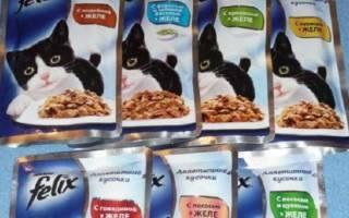 Корм для кошек Феликс (Felix) — отзывы и советы ветеринаров
