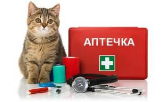 Аптечка для кошки: Топ 18 необходимых предметов
